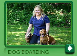 Boarding your dog in Norwalk CT
