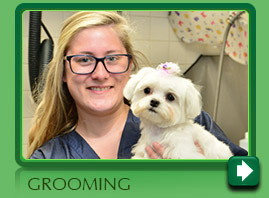 Grooming your pet in Norwalk CT