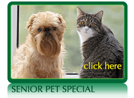 Monthly Special at Norwalk Animal Hospital