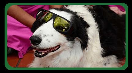 Norwalk Animal Hosptial Dental Clinic