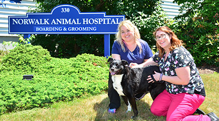 Norwalk Animal Hospital