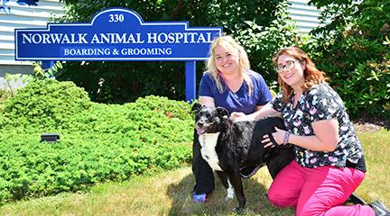 Norwalk Animal Hospital