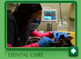 Pet Dental Services in  Norwalk CT