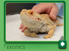 Exotic Pet Veterinarian in Norwalk CT
