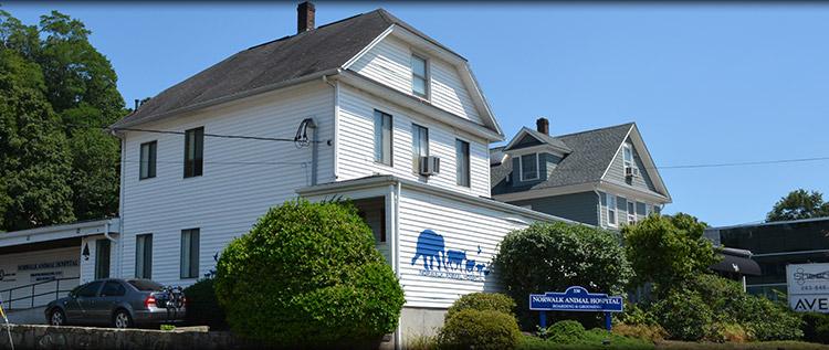 Norwalk Animal Hospital serving Norwalk, Westport & Darien