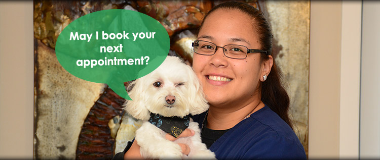 Request an appointment at Norwalk Animal Hospital
