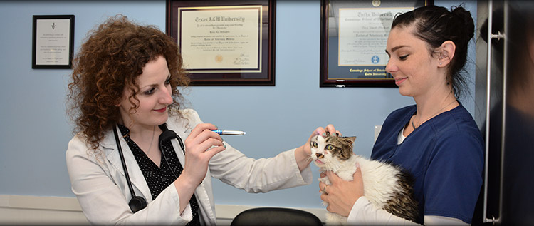 Veterinary Preventative Care in Norwalk, Westport and Darien CT