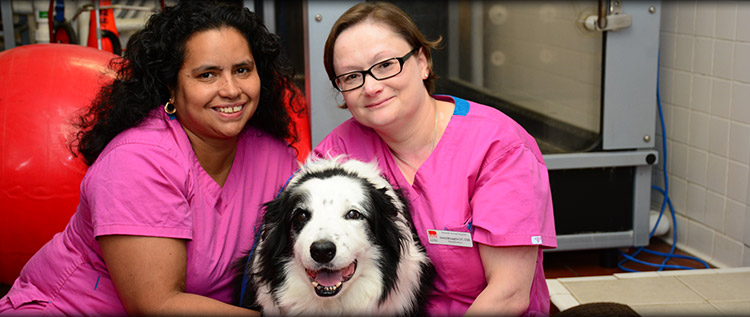 Veterinary Rehabilitation services in Norwalk, Westport and Darien CT