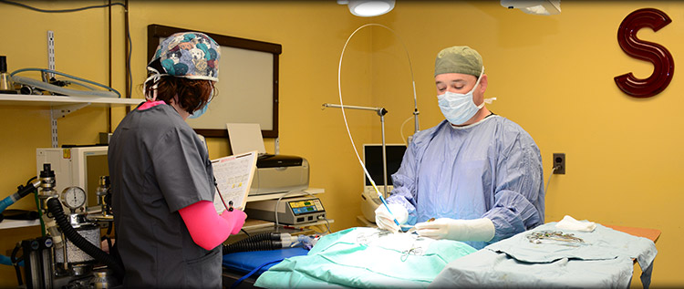 Veterinary Surgery in Norwalk, Westport and Darien CT