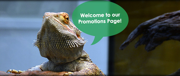 Promotions and discounts at Norwalk Animal Hospital
