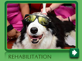 Pet rehabilitation Norwalk CT