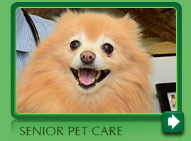 Senior Pet Care Care Norwalk CT