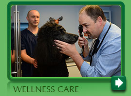 Pet Wellness Care Norwalk CT