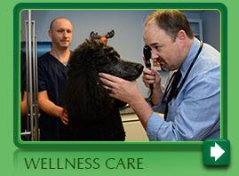 Pet Wellness Care Norwalk CT